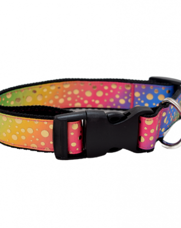 rainbow and spots collar