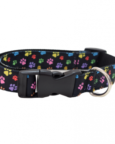 rainbow paws collar