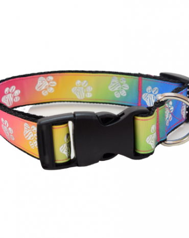 rainbow silver paws collar